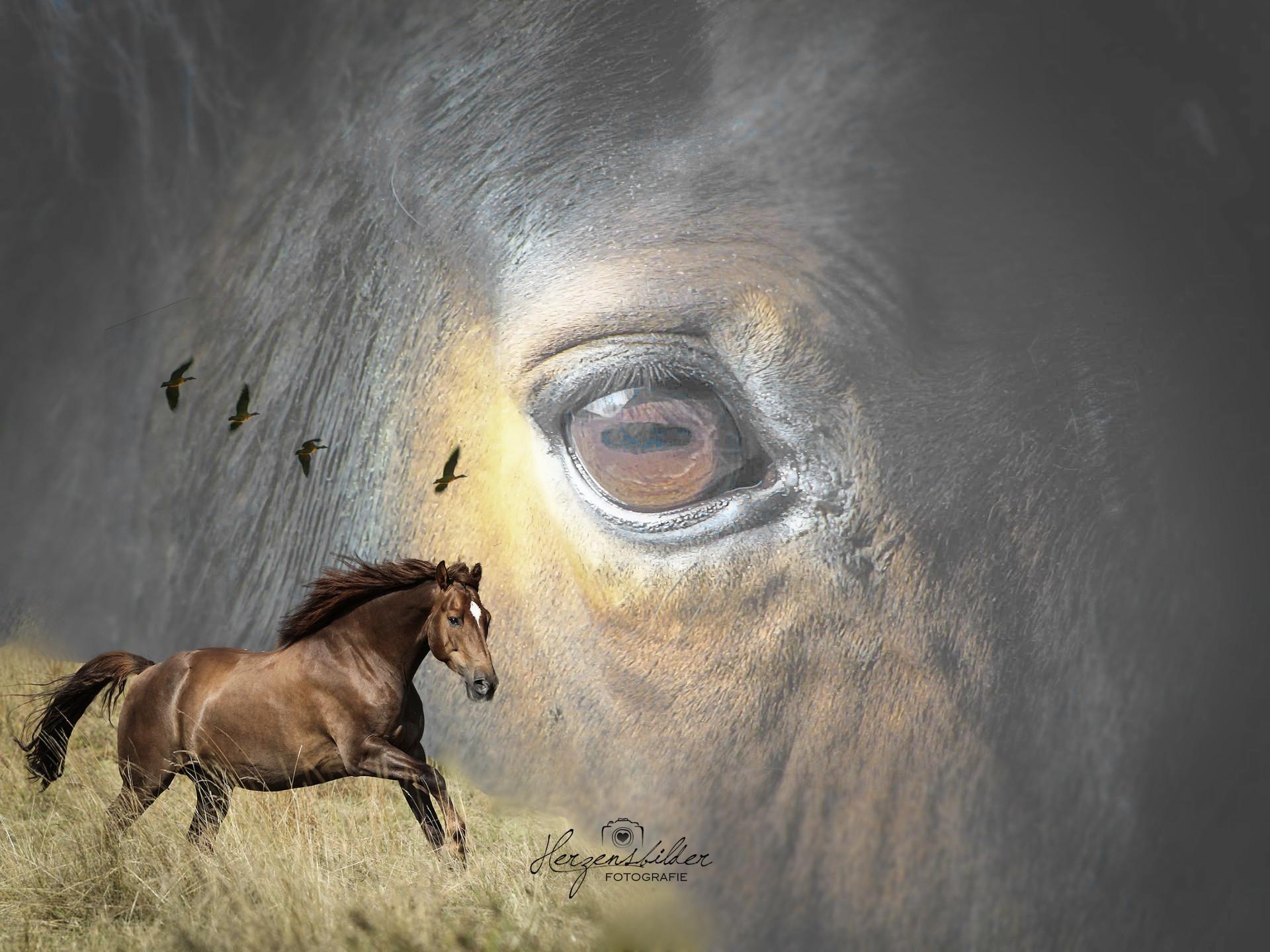 Tierfotografie Halle Tierfoto Pferd Freiheit Hengst Sehnsucht