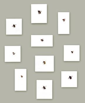 Bees, Butterflies & Bugs