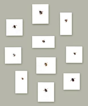 One Bee Left