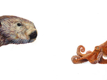Top Predator - Otter & Octopus
