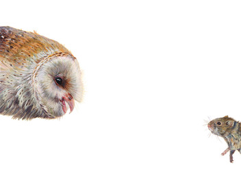 Top Predator - Owl & Vole