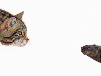 Top Predator - Wildcat & Water Vole