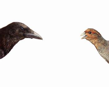 Top Predator - Crow and Partridge