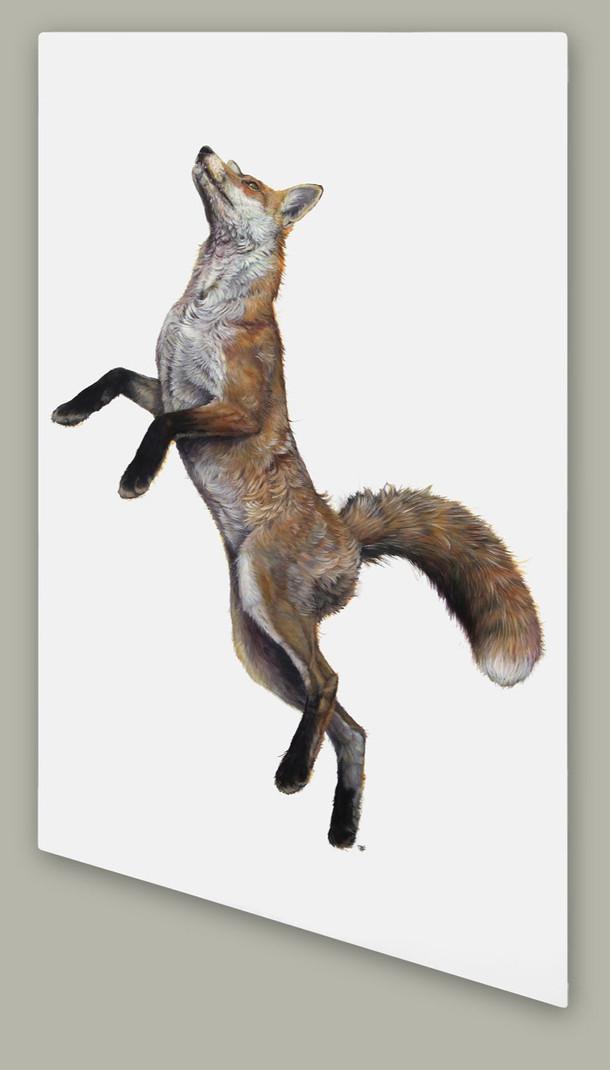 High Rising Fox