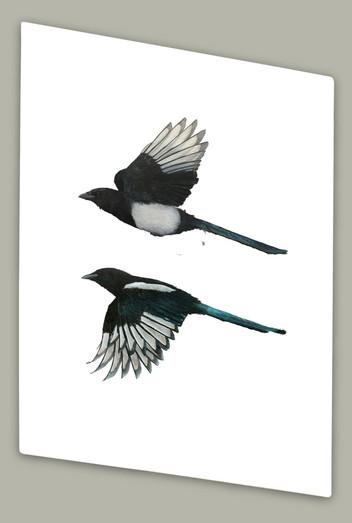 Increasing Magpies