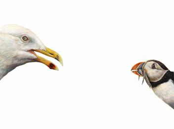 Top Predator - Gull & Puffin