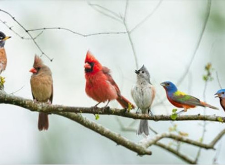 Birds by their Beaks - Science Activity for Elementary Students