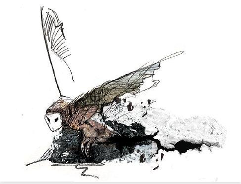 """'Barn Owl' 8"""" X 10"""" PRINT"""