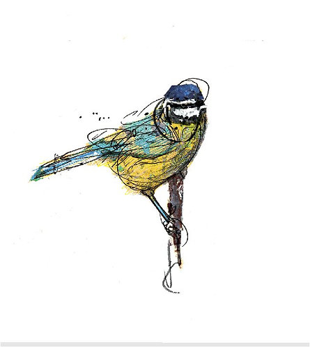 "'Blue Tit' 8"" x 10"" PRINTS"