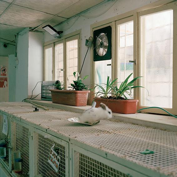 In The Museum of Nature-Gabriela Gleizer