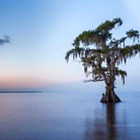 dram tree.jpg