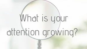 What is your attention growing?