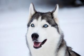 Köpeğe Yakın Bakış