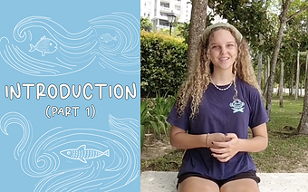 Sydney's Ocean Plastic Series Episode 1 - The Sea Monkey Project