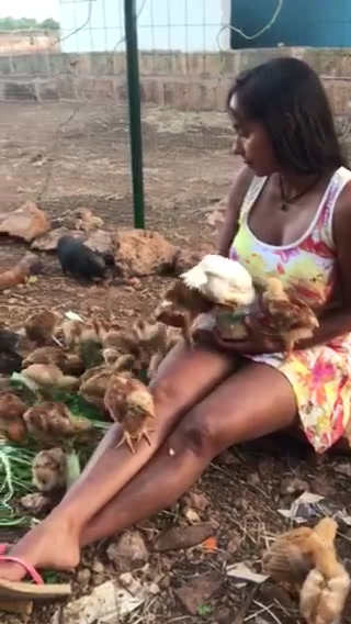 fresopolis_hühner.MOV