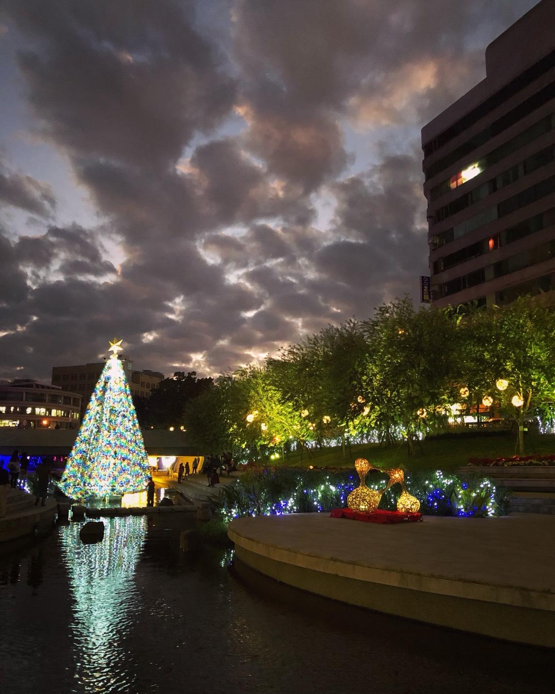 柳川聖誕-花之樹