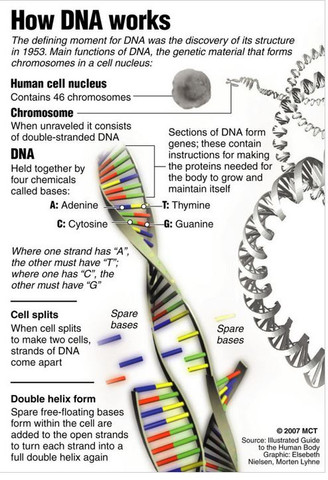 DNA is a Fractal Antenna in Electromagnetic Fields