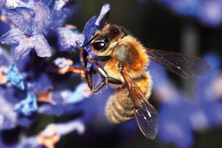 Bees Voted to be the Most Important Living Beings on Earth