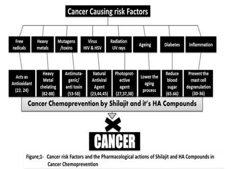 Shilajit: A Humic Matter Panacea for Cancer