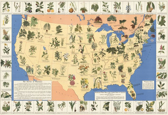 1930's Map of Medicinal Plants now Hijacked by Big Pharma