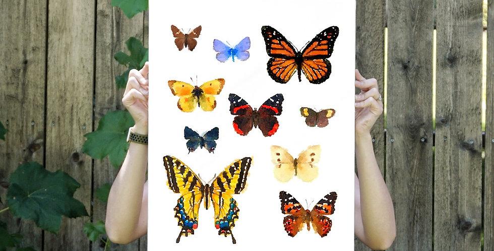 Wasatch Butterflies