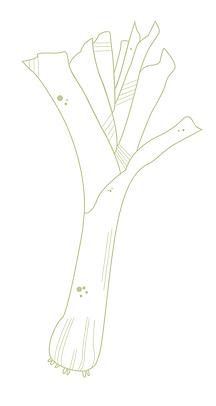 Illustration poireaux