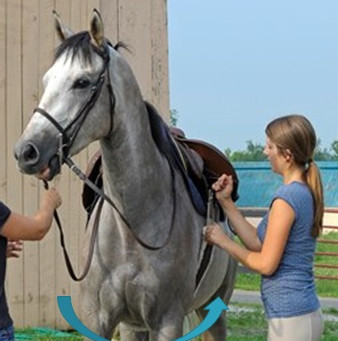 Girthy Behaviour in Horses and Myofascial Trigger Points