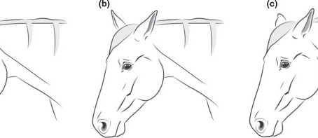 Horse Back Pain - Recognising a Sore Back - Part 1: Facial Expressions and Posture