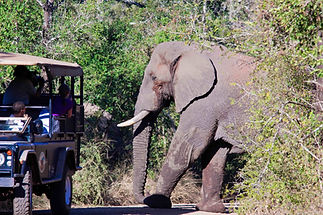 tours-elephant1.jpg