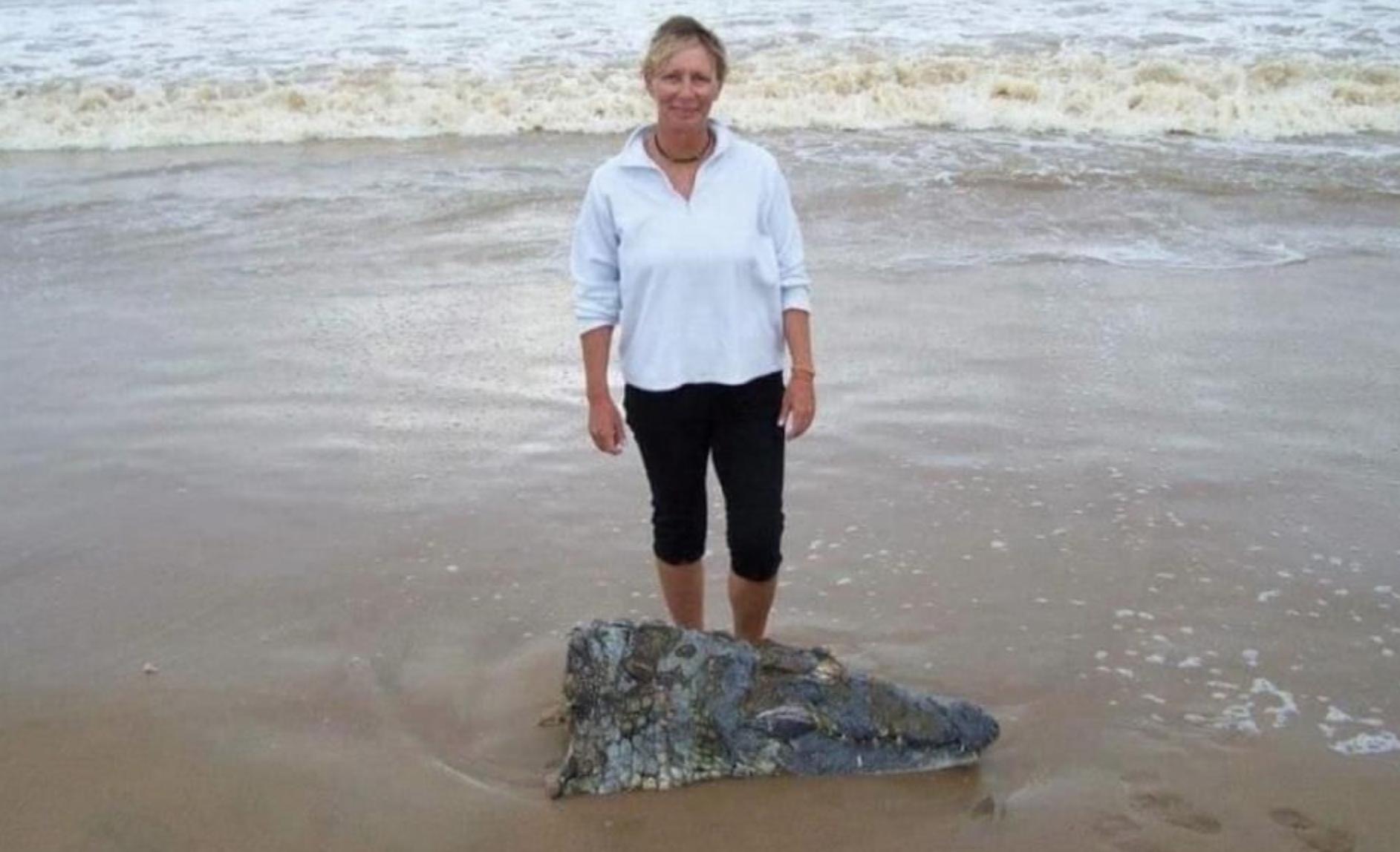 Croc vs. Shark