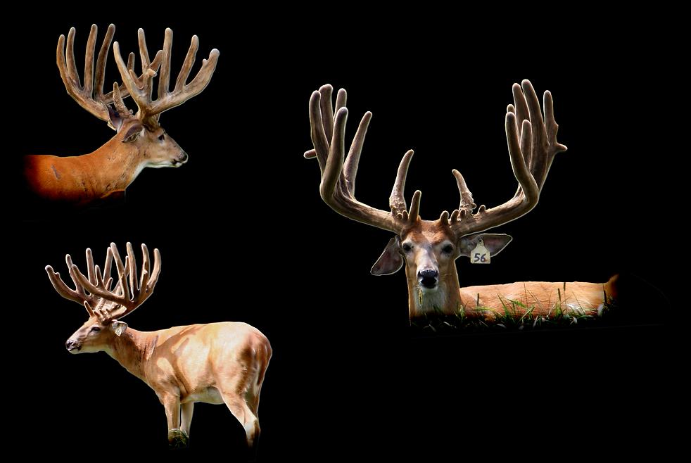 Breeder 56 collage.png