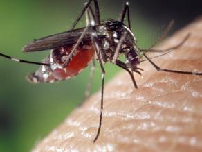 夏天戶外運動多蚊蟲?三招簡單方法防蚊