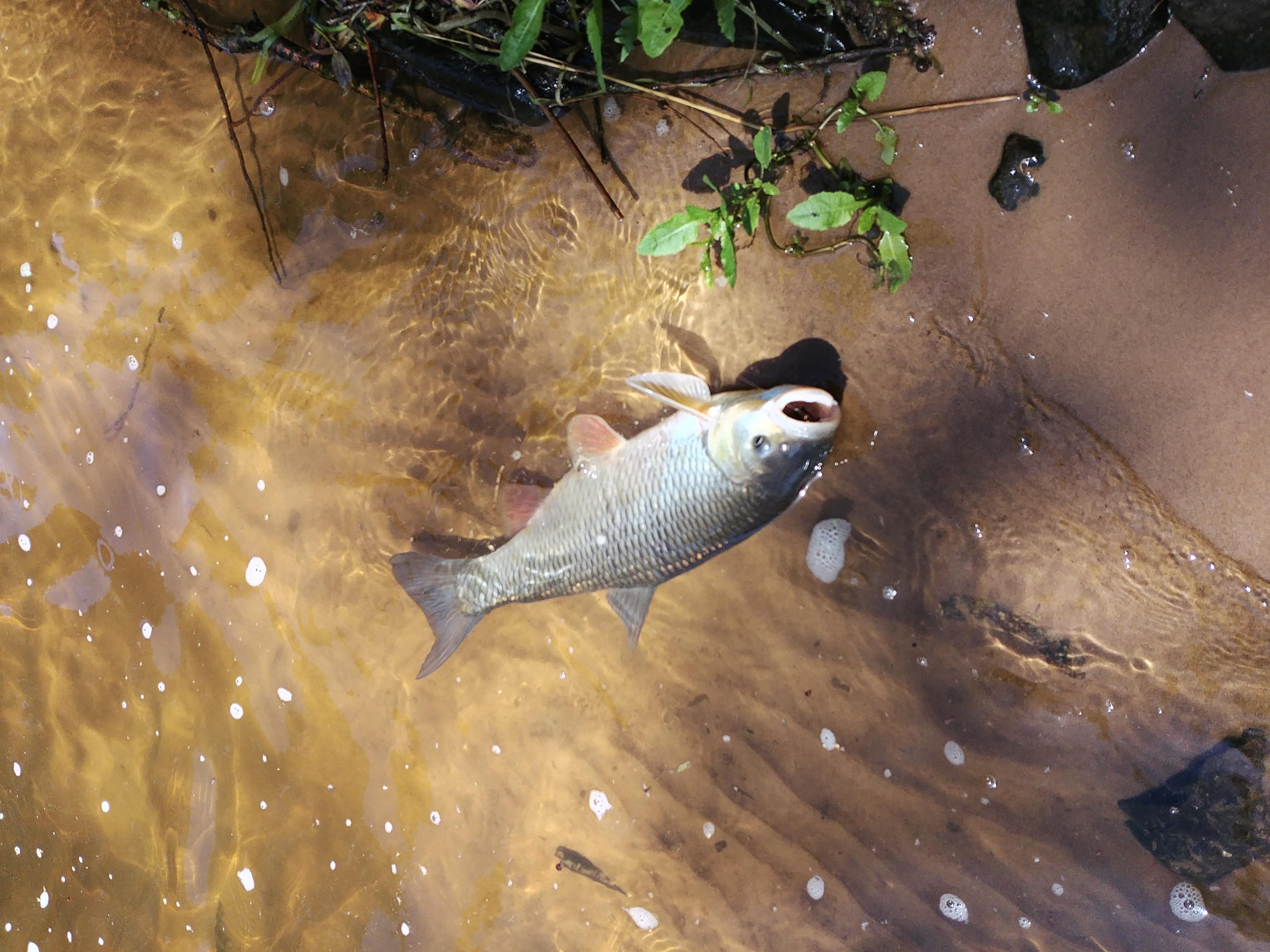 Bachfischen 2020