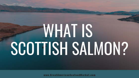 what is scottish salmon - Great American International Seafood Market