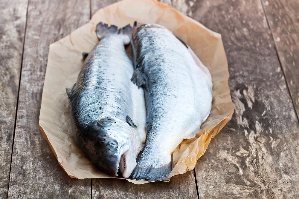 scottish salmon, great american international seafood, sustainable salmon