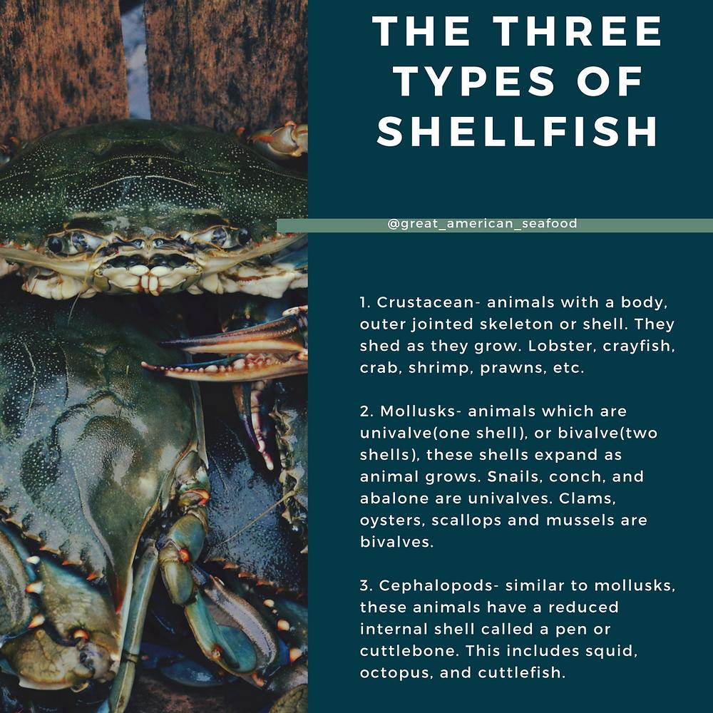 3 types of shellfish
