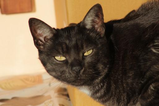 gatto nero siphotovideo.JPG