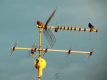 MERLI antenna siphotovideo.jpg