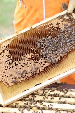 Lillgårdens bi och trädgård (Lillgården's bee and garden) Photo: Anna Larsson.