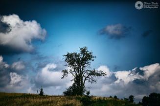 Der Baum - Regio Dlugi Kat