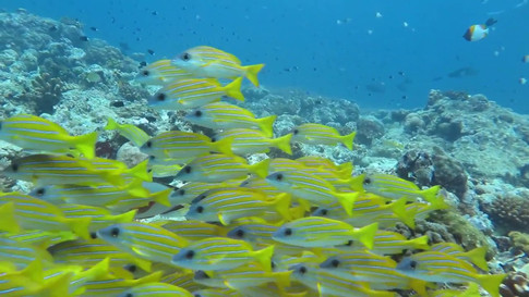 Tauchen Palau 2016