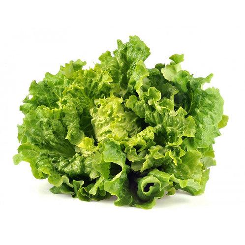Salade batavia (à l'unité)