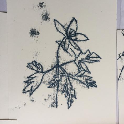 Woodland Anemone, monoprint