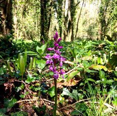 Daily walk: Wild Orchid