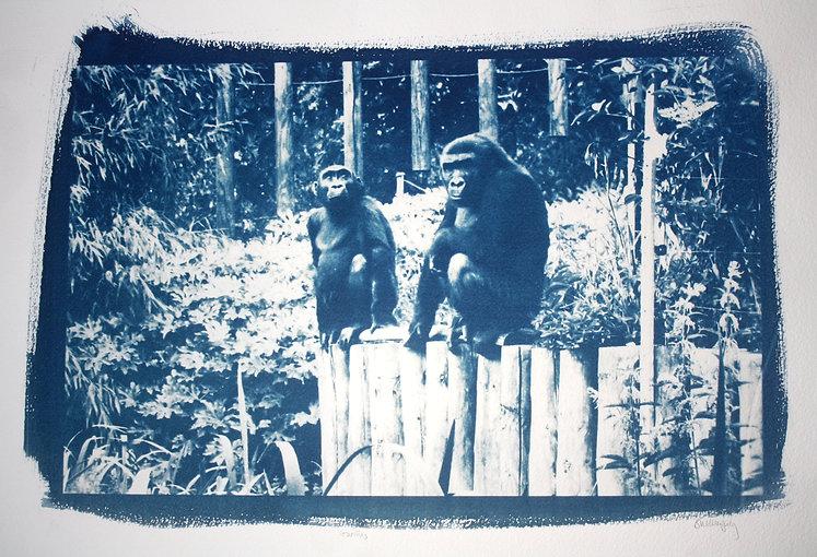Gorillas FI.jpg