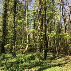 Daily Walks: local woodland