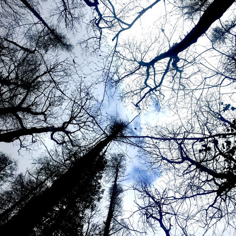 Daily walks: looking up