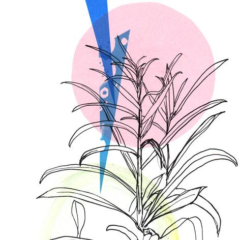 Garden Plants.jpg