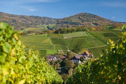 2de Deutsches Weininstitut : Baden online.