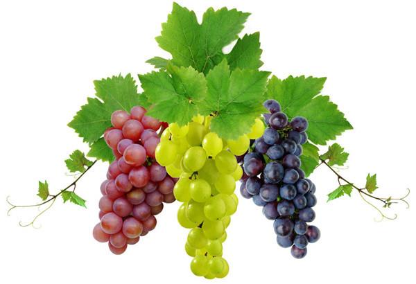Druivenrassen - Sauvignon Blanc/Syrah/Pinot Noir/..